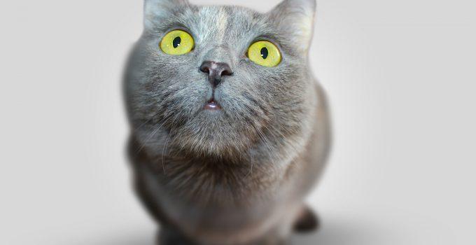 Katter är söta men kan ibland orsaka otrevlig lukt